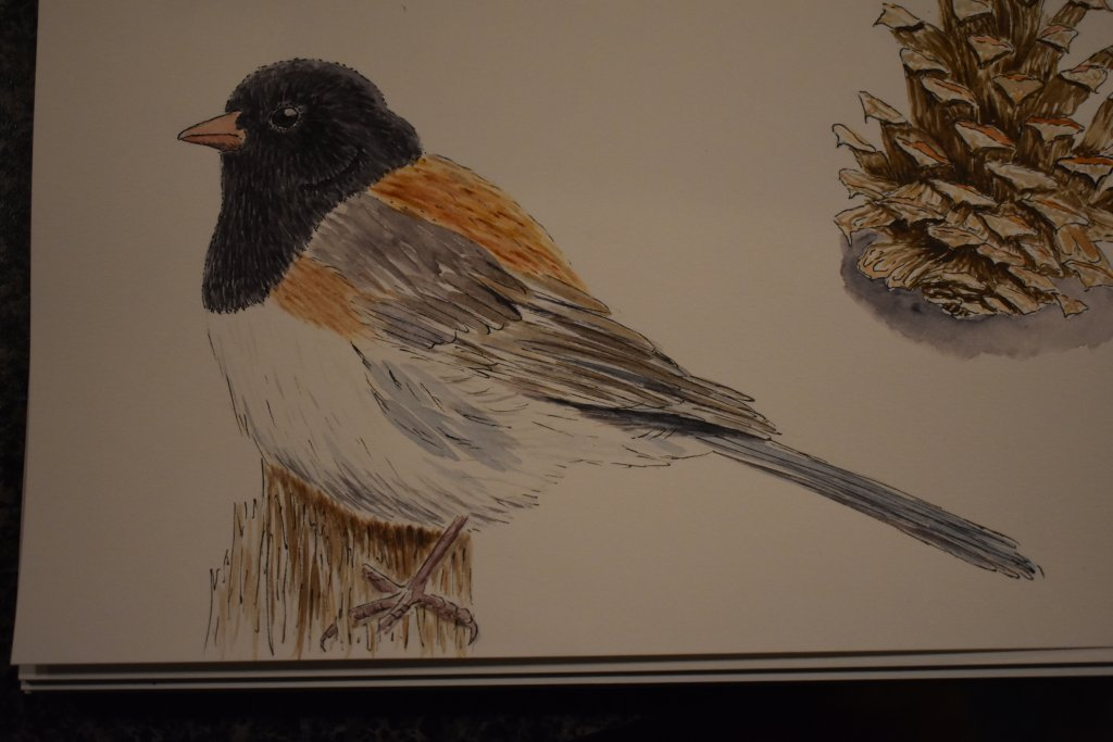 Dec 8 Birds. Always a favorite subject. This one is a dark-eyed junco. DSC_7812