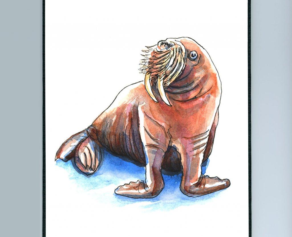 Walrus Watercolor Painting Sketchbook Detail