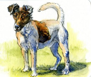 Fox Terrier-Did you know that up until 1860, any dog small and fast enough to flush a fox out of his