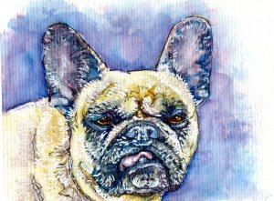 French Bulldog-Zebra Zensations Technical Pen, Signo Uniball White & QoR Watercolor on Hahnemüh