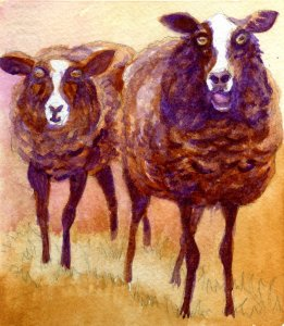 Zwartbles – Counting Sheep #4 in a Mary Roff watercolor sketchbook. #Fabriano1264 #HandmadeSke