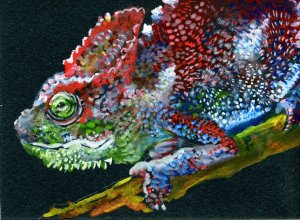 Chameleons are interesting critturs. Just a few of fun facts about them: They don't change col