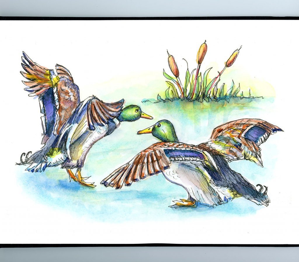 Mallard Ducks Pond Cattails Watercolor Painting Sketchbook Detail