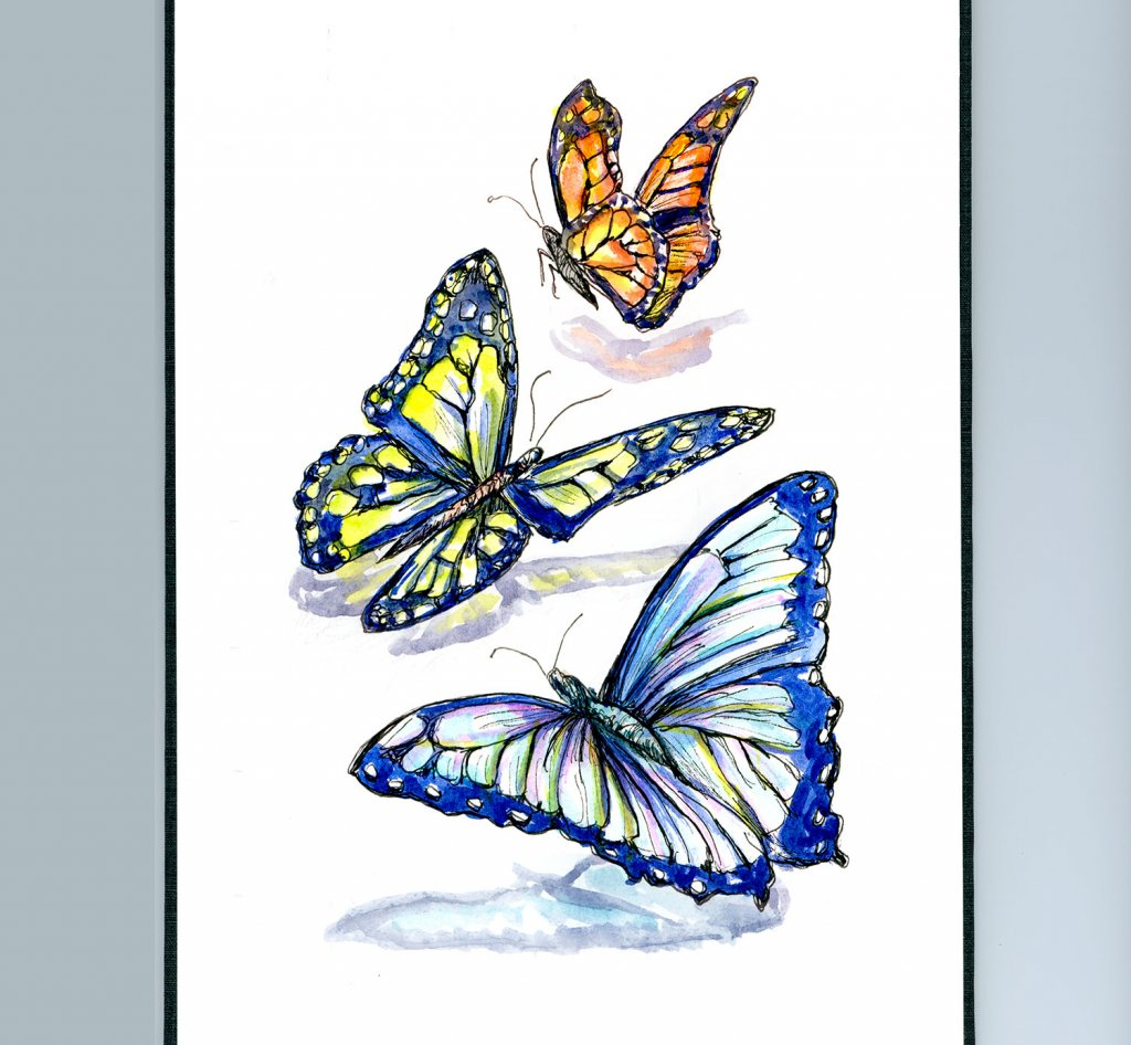 Colorful Butterflies Watercolor Illustration Sketchbook Detail