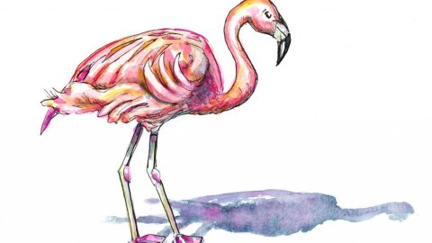 Pink Flamingo And Shadow Watercolor Illustration