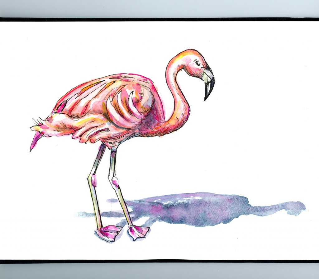 Day 24 - Pink Flamingo And Shadow Watercolor Illustration Sketchbook Detail