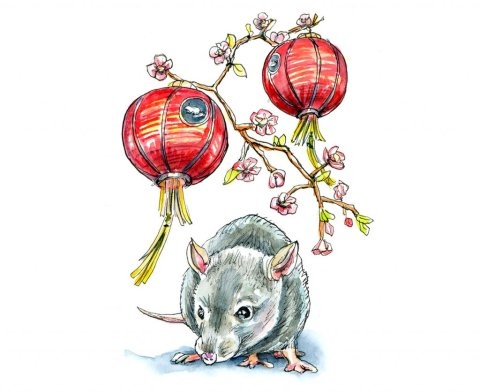 Chinese New Year 2020 Year Of The Rat Watercolor Illustration