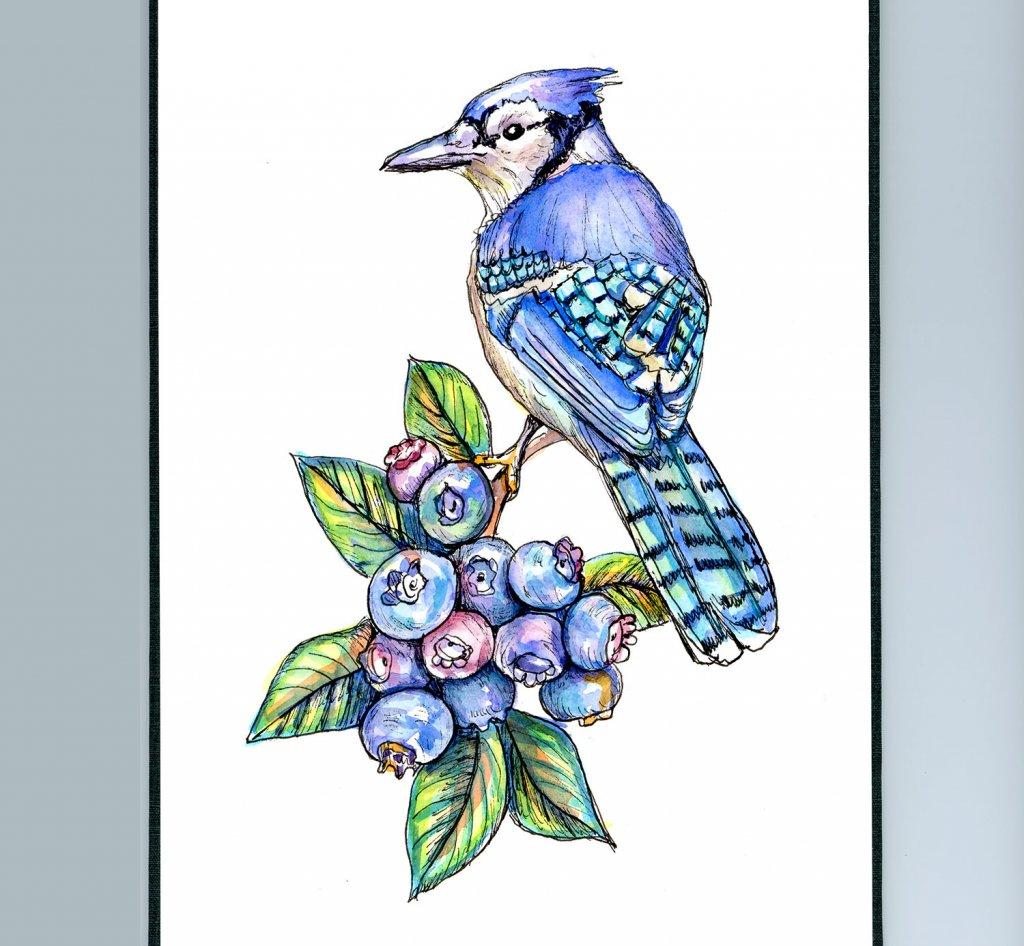 Blue Jay And Blueberries Watercolor Illustration Sketchbook Detail
