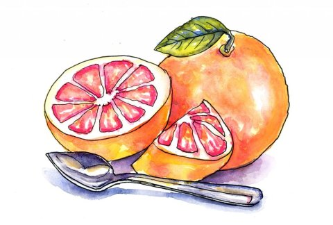 Grapefruit And Spoon Watercolor Painting