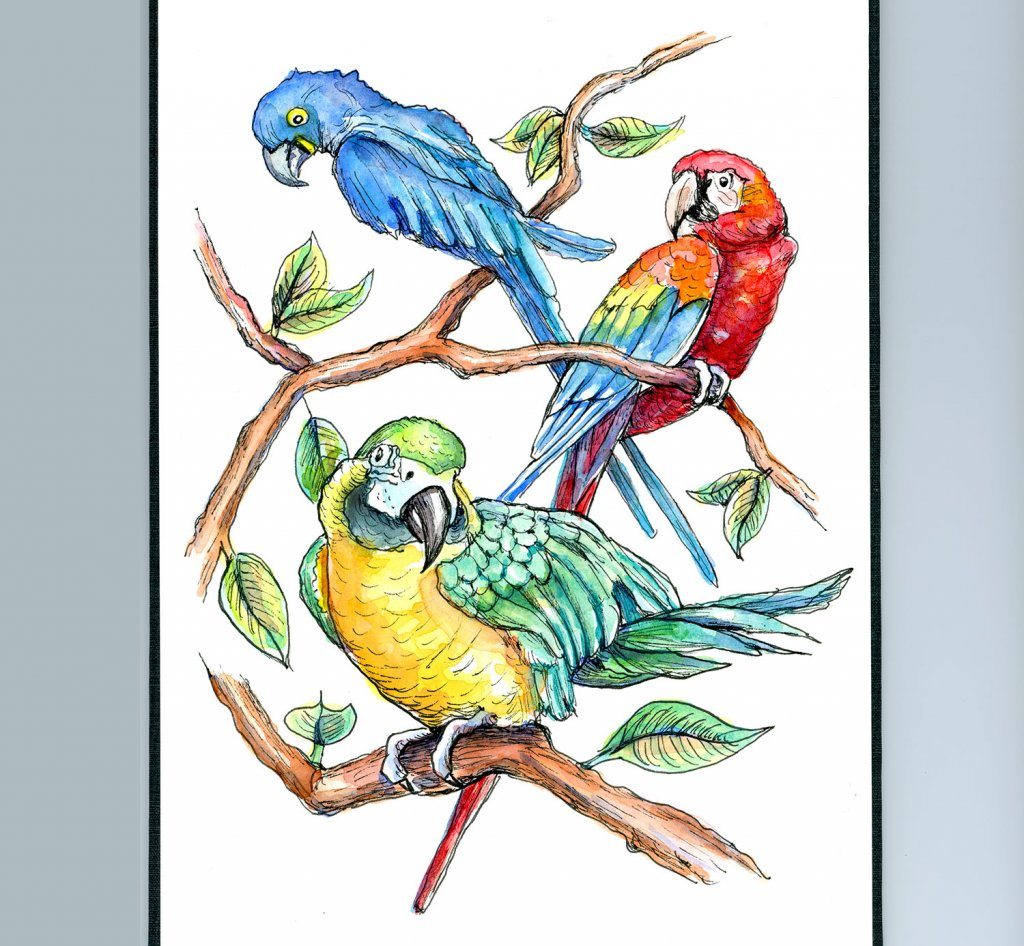 Macaws Three Yello Gold Scartlet Blue Watercolor Painting Sketchbook Detail