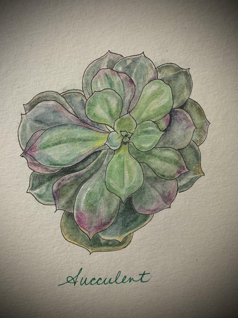 My little succulent. IMG_1014 2