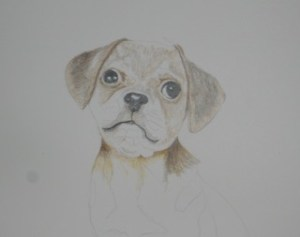 World Watercolor Group™ This little pup Muffin is the start of a drawing which I will get som