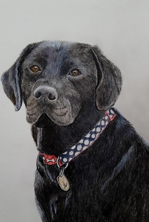 Guide Dog Puppy Portrait Watercolor Pencil