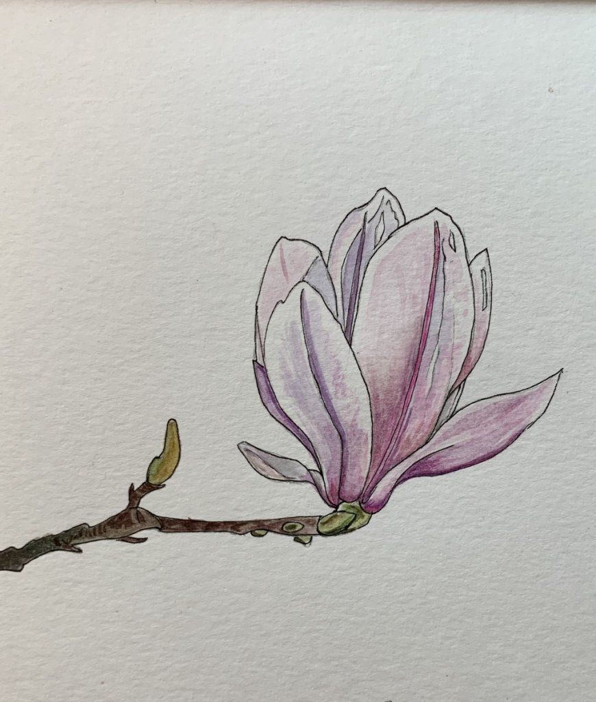 I can't wait for these beautiful magnolias to bloom. They're one of my favourite flowers