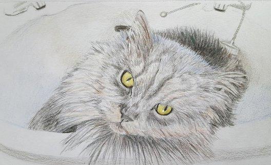 Cat In Sink Drawing by Judy Jones