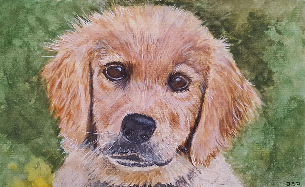 Puppy Watercolor Painting by Judy Jones
