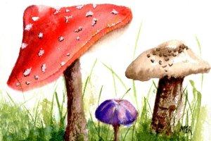 2.24.20 Mushrooms 2.24.20 Mushrooms img020
