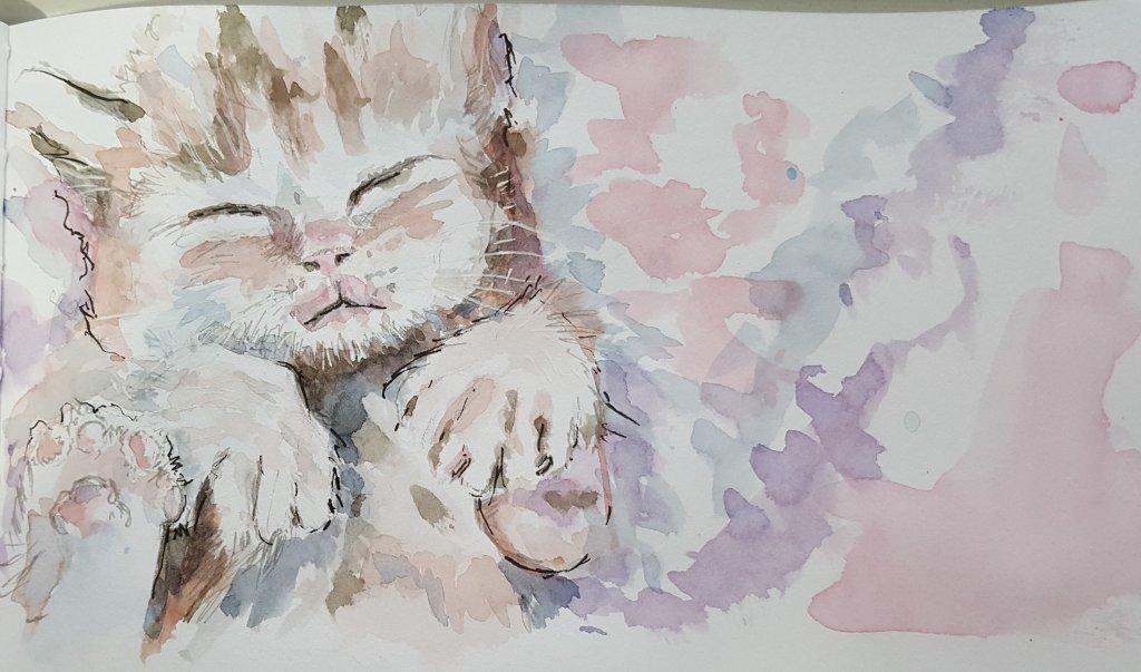 kitty Kat 20200221_164549