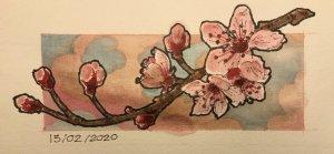 13/02/2020 Cherry Blossoms 7003A855-F094-4BC9-974D-B96C047FB0E0