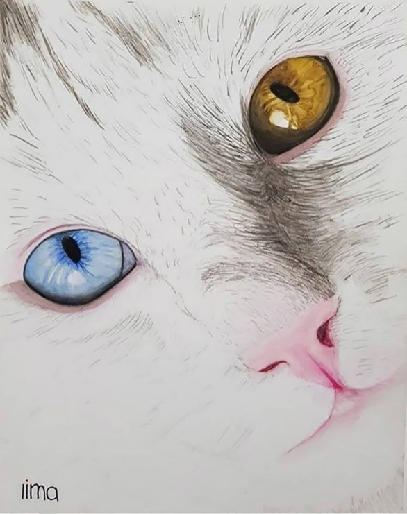 Cat With Two Different Color Eyes Watercolor Painting