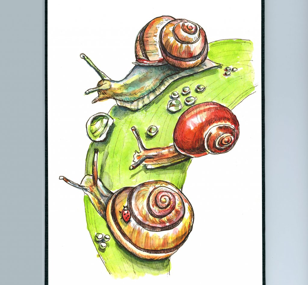 Snails Raindrops On Leaves Watercolor Painting Sketchbook Detail