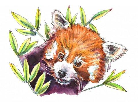 Red Panda Bamboo Leaves Watercolor Painting