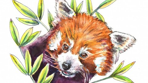 Red Panda Bamboo Leaves Watercolor Painting