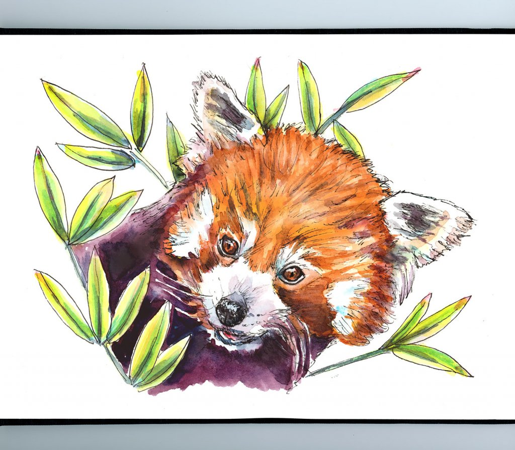 Red Panda Bamboo Leaves Watercolor Painting Sketchbook Detail