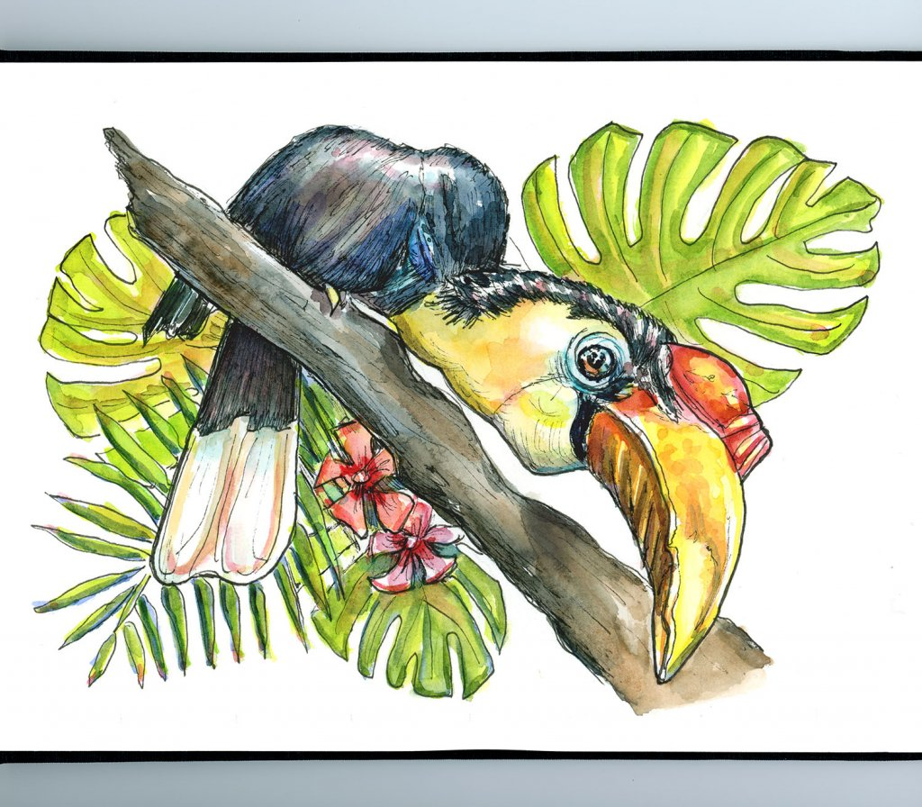 Wrinkled Hornbill Endangered Tropical Bird Watercolor Painting Sketchbook Detail