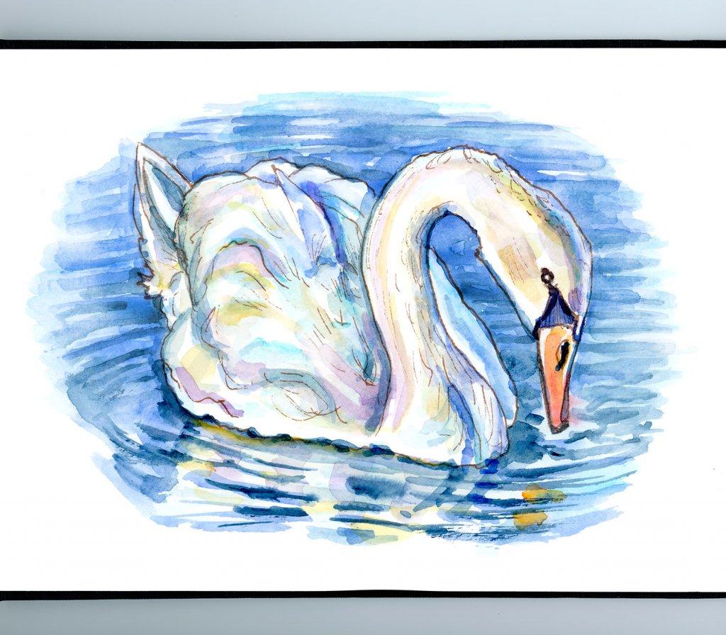 White Swan On The Water Watercolor Painting Sketchbook Detail