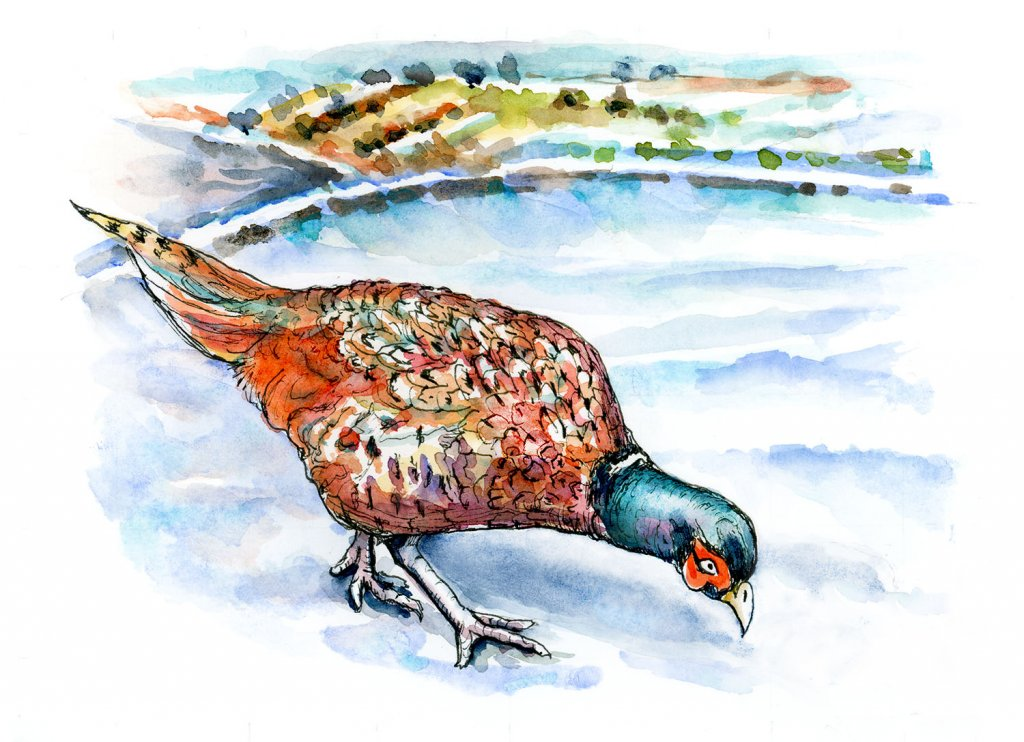 Pheasant In The Snow Watercolor Painting