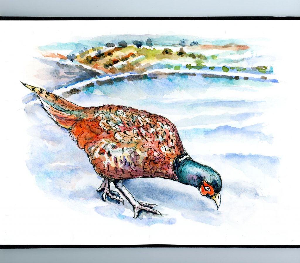 Pheasant In The Snow Watercolor Painting Sketchbook Detail