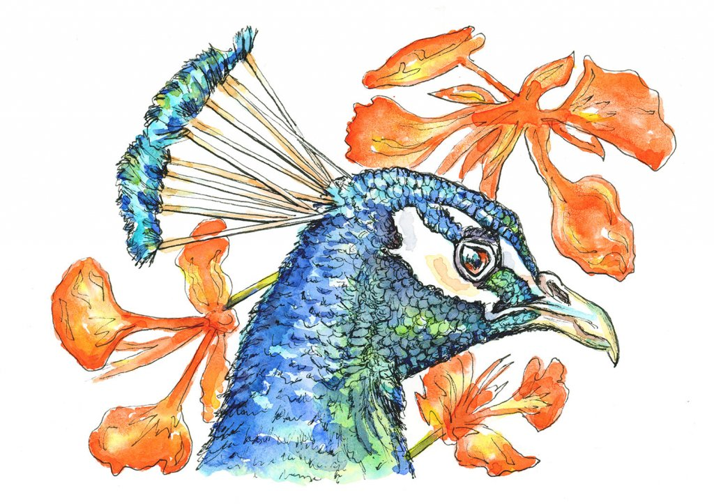 Peacock Head And Peacock Flowers Watercolor Illustration