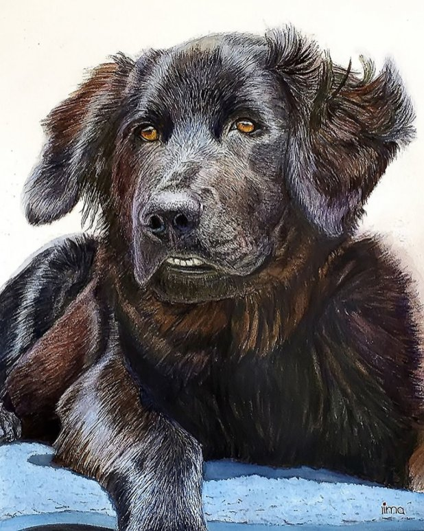 Dog Realistic Watercolor Painting Portrait