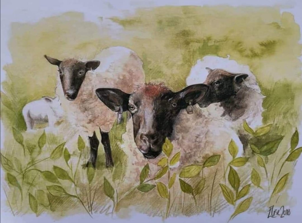 Elise Richards Artist Watercolor Painting Of Sheep