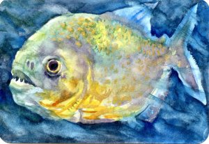 Gold Dust Piranha – #PostcardsForTheLunchBag Piranhas come in many different colors, including