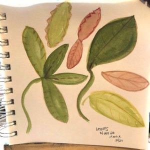 Leaves practice.. IMG_4329