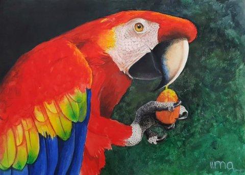 Parrot Scarlet Rainbow Macaw by Nereida Lima
