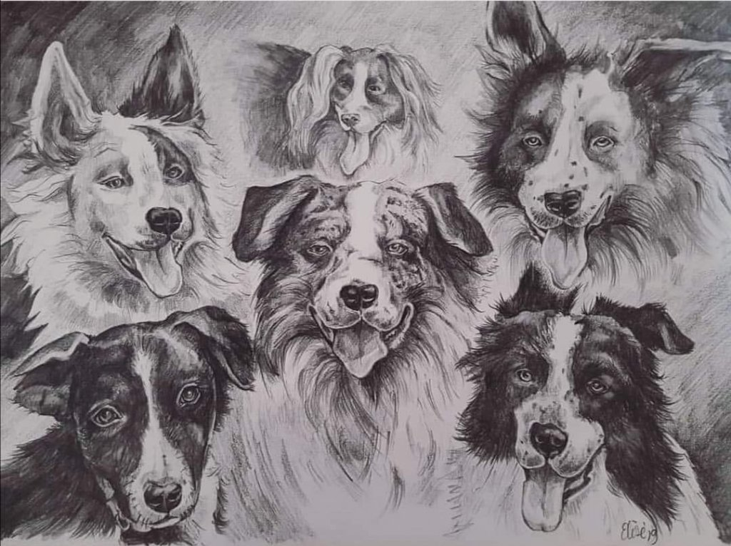 Six Dogs Drawing