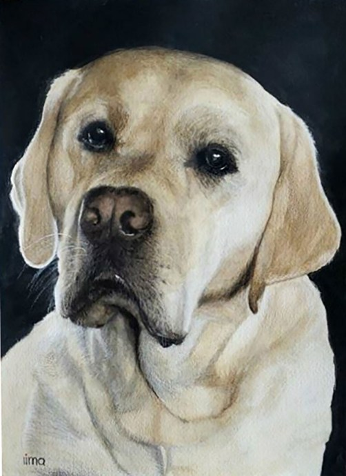 White Dog Pet Portrait Watercolor Painting by Nereida Lima