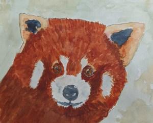 Red Panda sb70p69