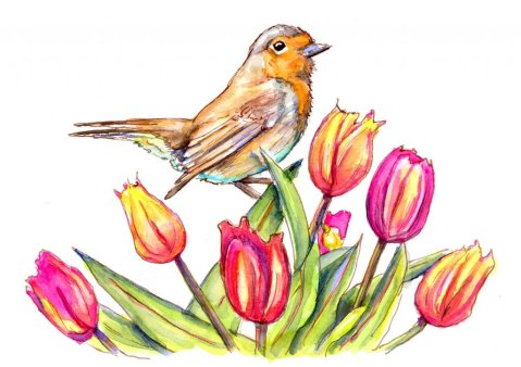 Tulips And Robin Watercolor Painting