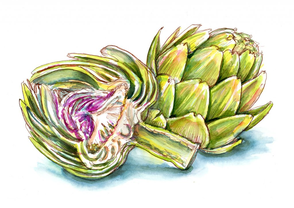 Artichoke Heart Watercolor Illustration