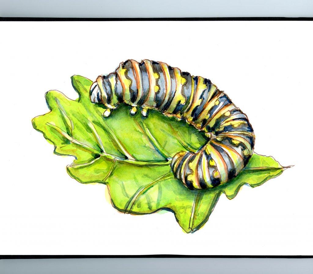 Caterpillar Watercolor Painting Sketchbook Detail
