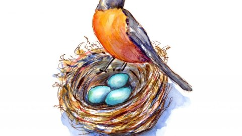 Robin And Robin's Eggs Nest Watercolor Painting
