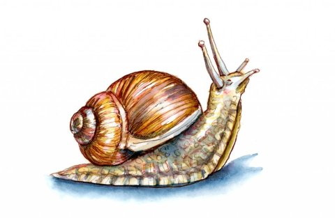 Snail Looking Up Watercolor Painting
