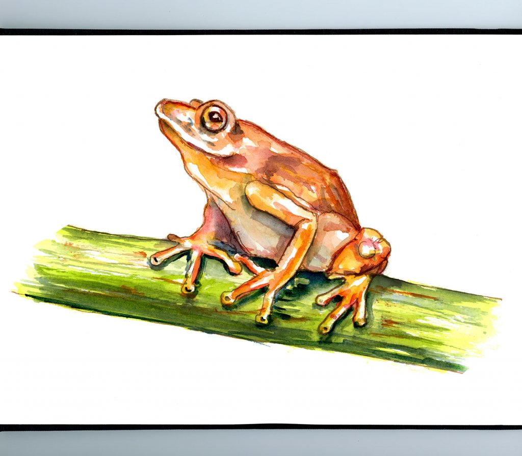 Frog On Bamboo Watercolor Painting Sketchbook Detail