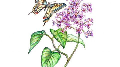 Butterfly And Lilac Flower Leaves Watercolor Illustration