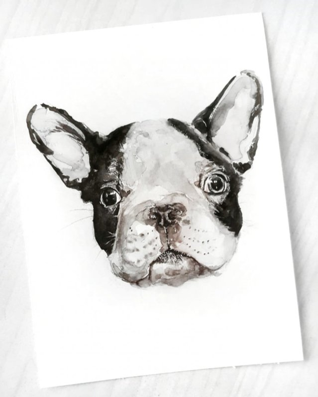 French Bulldog Watercolor Painting by Jenny Tran