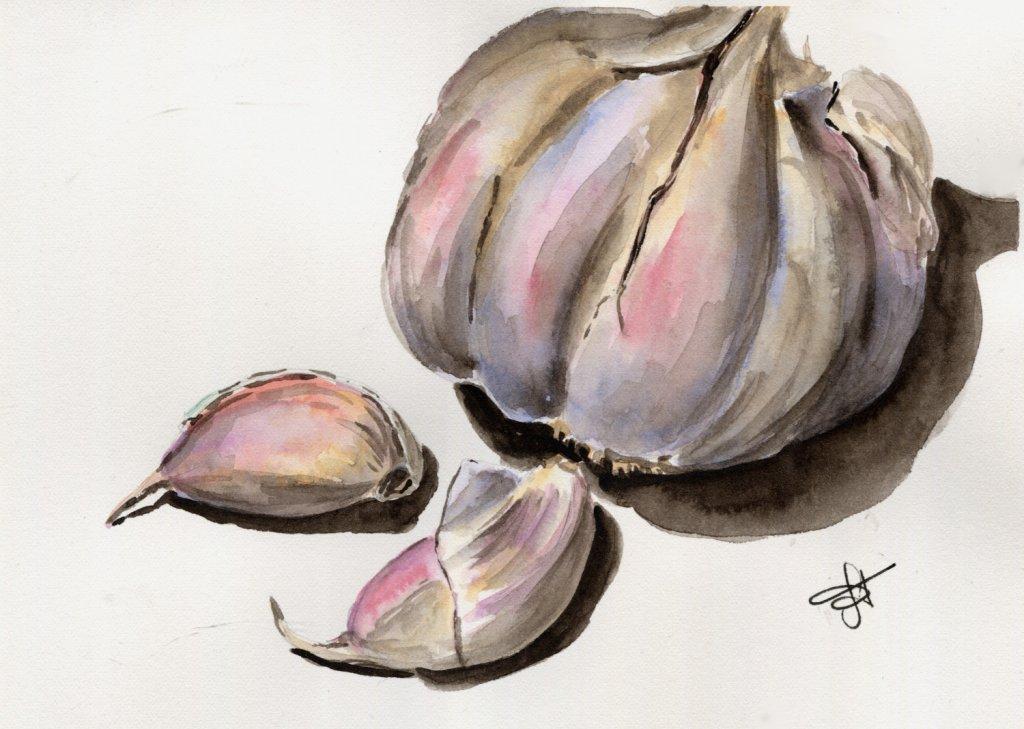 Garlic Watercolour Painting